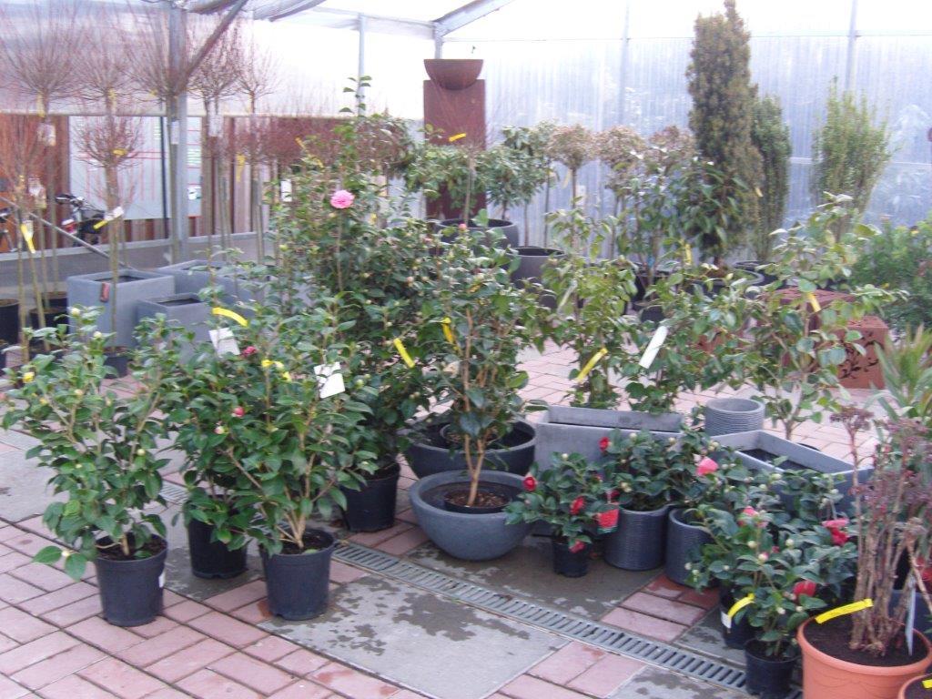 Baumschulen Tüns Heckenpflanzen jetzt bestellen und pflanzen